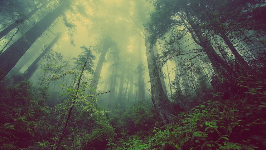 Modéliser la forêt